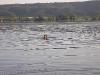 bodensee-schwimmen4