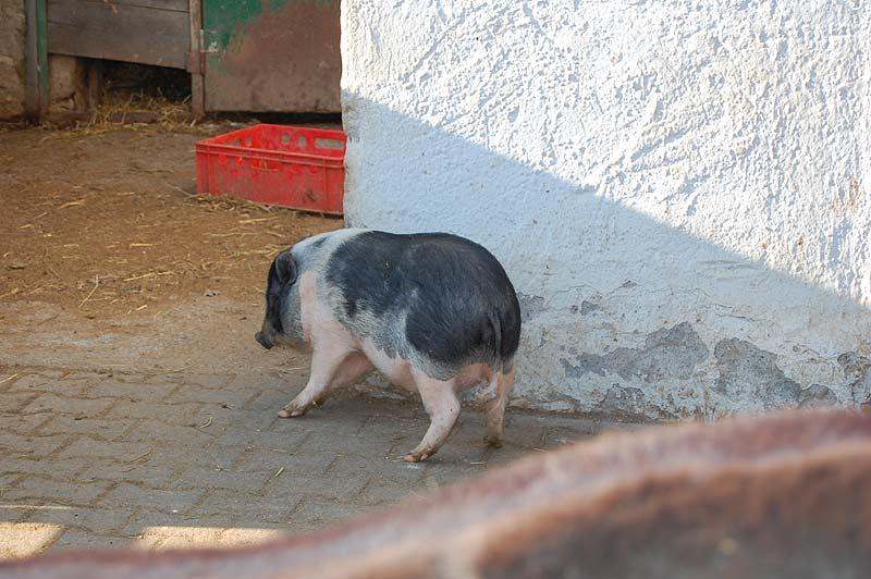 lochmuhle-2010-03-07-39