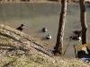 lochmuhle-2010-03-07-23