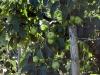 stahringen-wahlwies-2010-07-18-44