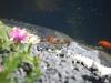 teich-2010-05-24-2