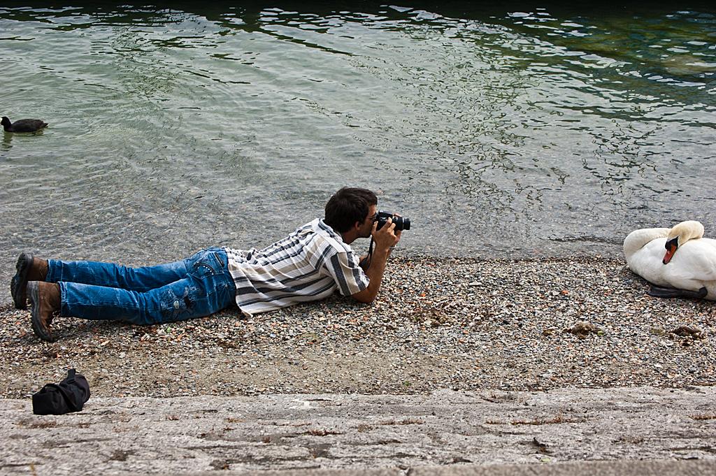 Die Kamera und der Schwan